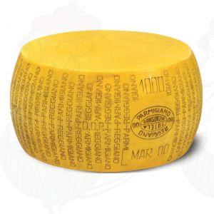 Cheese Dummy Parmesan Reggiano